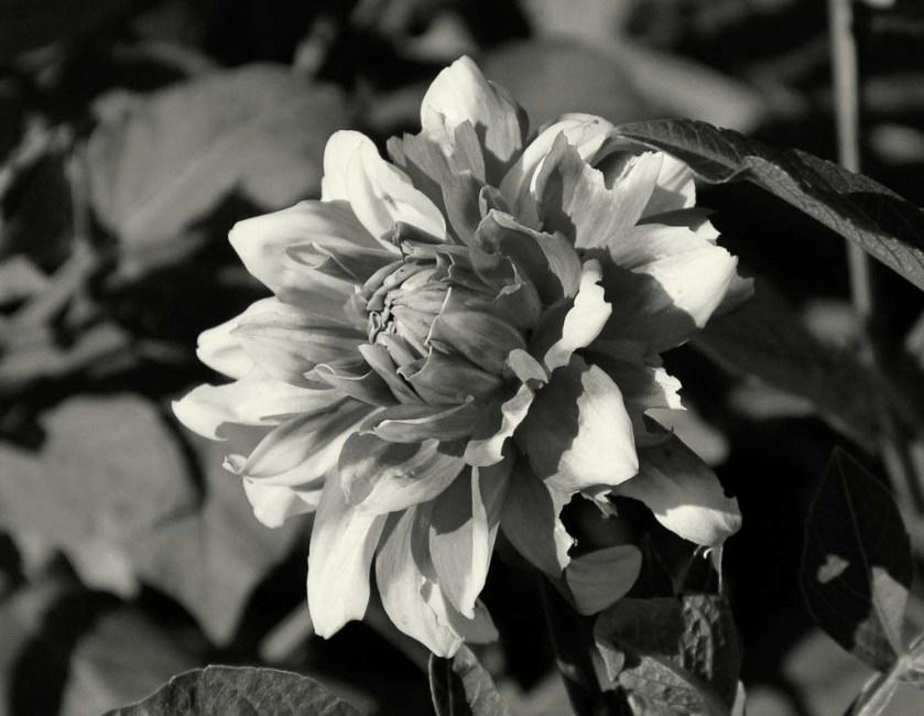 LaurieFlower (1 of 1)