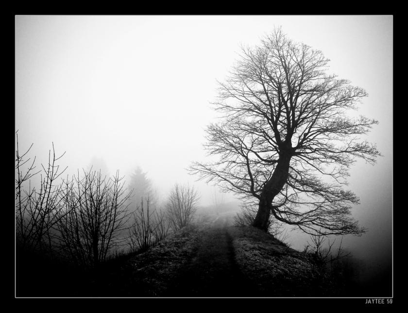 Fogtree2_jaytee59_13