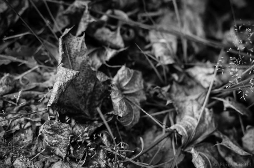 leaves_ElinaK