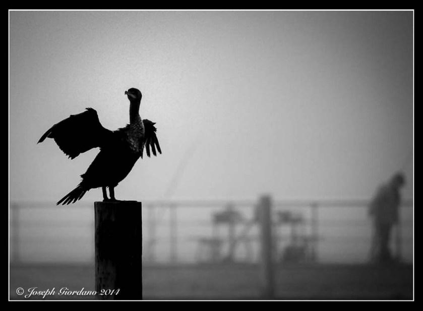 Vulture-Border (1 of 1)