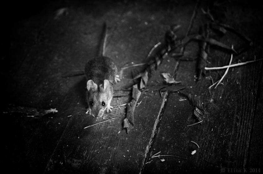 mouse_ElinaK