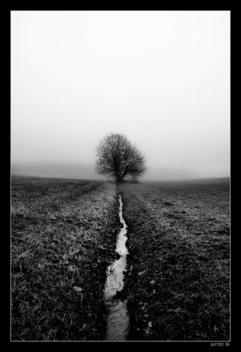 Lone Tree Creek