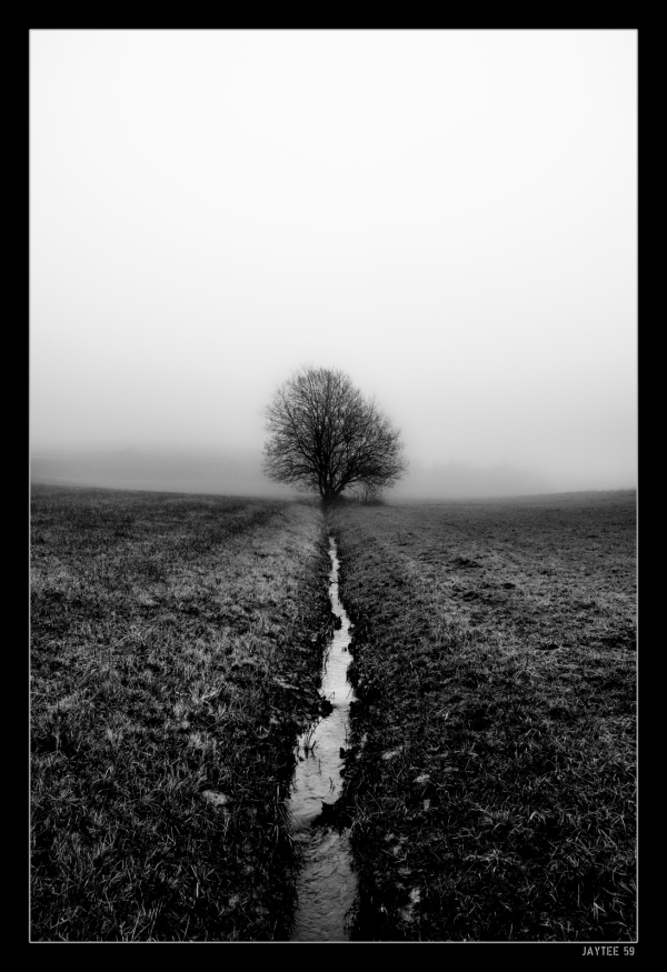 fogtree22_jaytee59_15