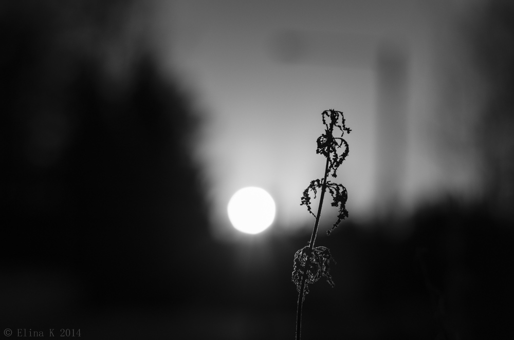 sunset_Elina