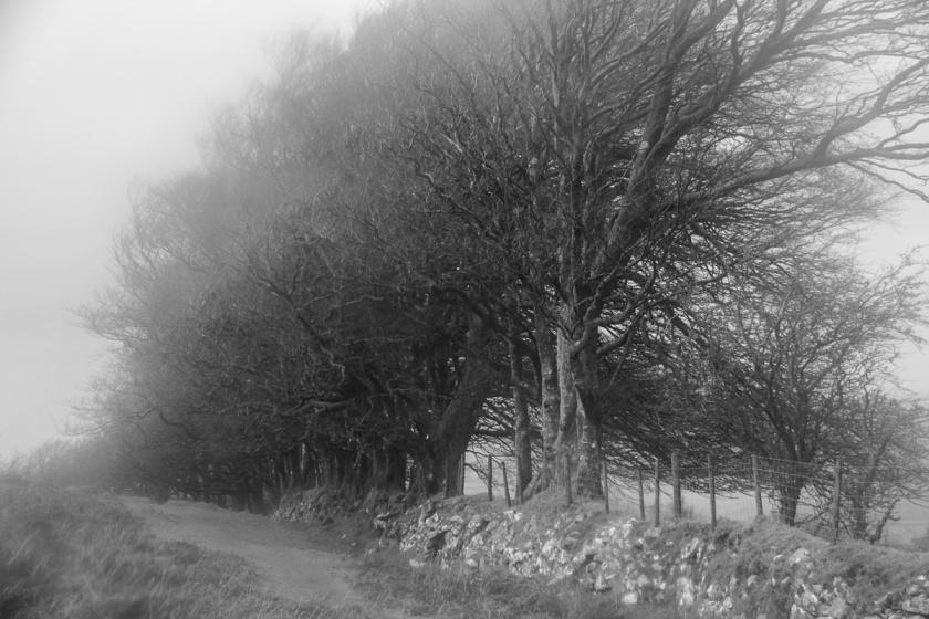 Dartmoor Wind