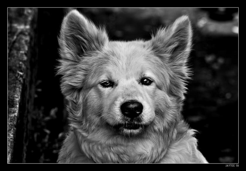 whitedog_jaytee59_16bw