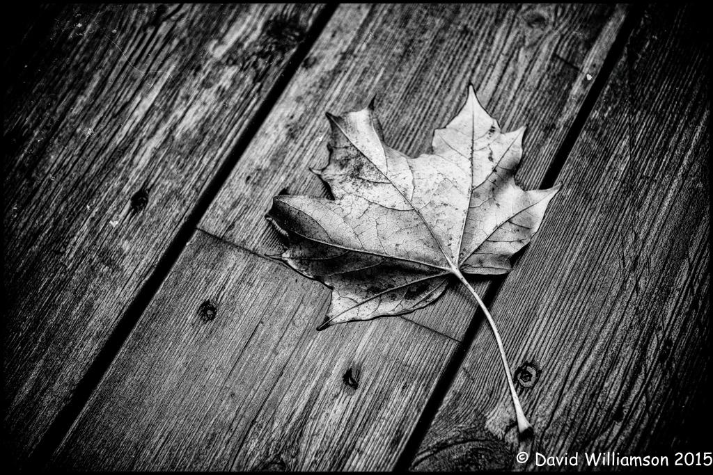 20120923-untitled shoot