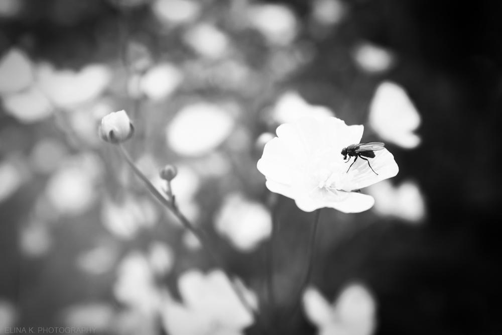 little_flower