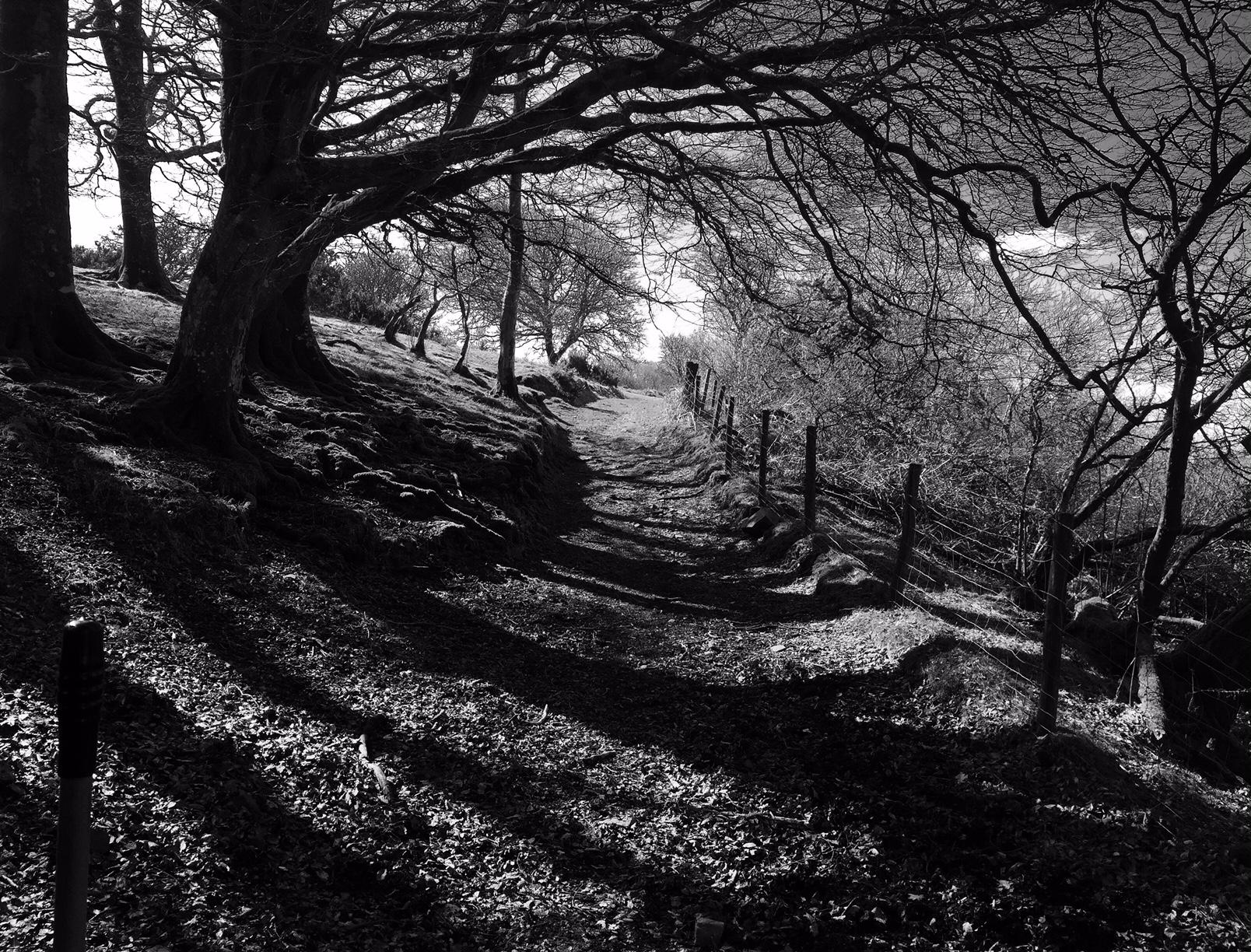 DartmoorSpring©PattiFogarty