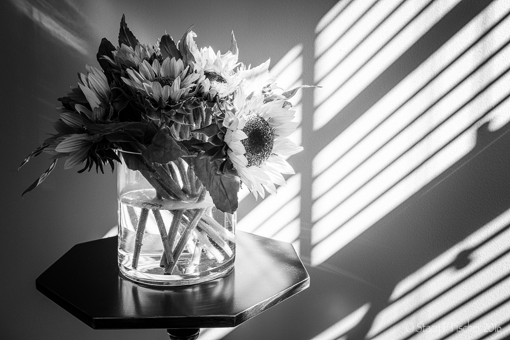 Sunflowers in vase highlighted by sun coming through window blinds