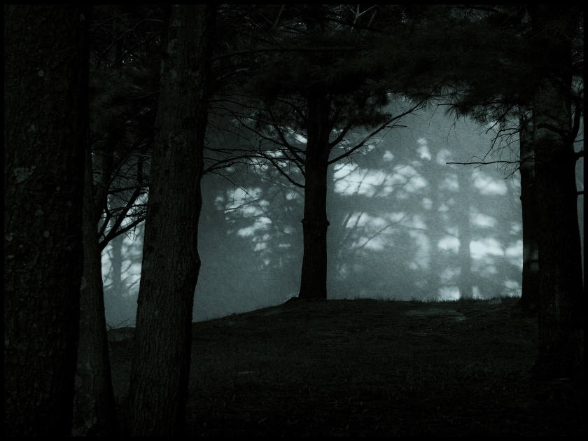 Moonlight through the pines, Woodbury, CT © Steven Willard