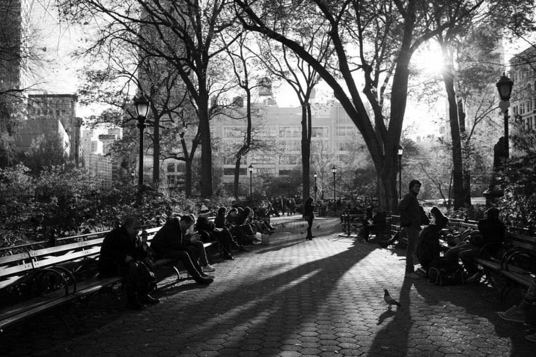 Afternoon Light ©Patti Fogarty
