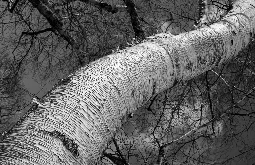 tree trunk-1
