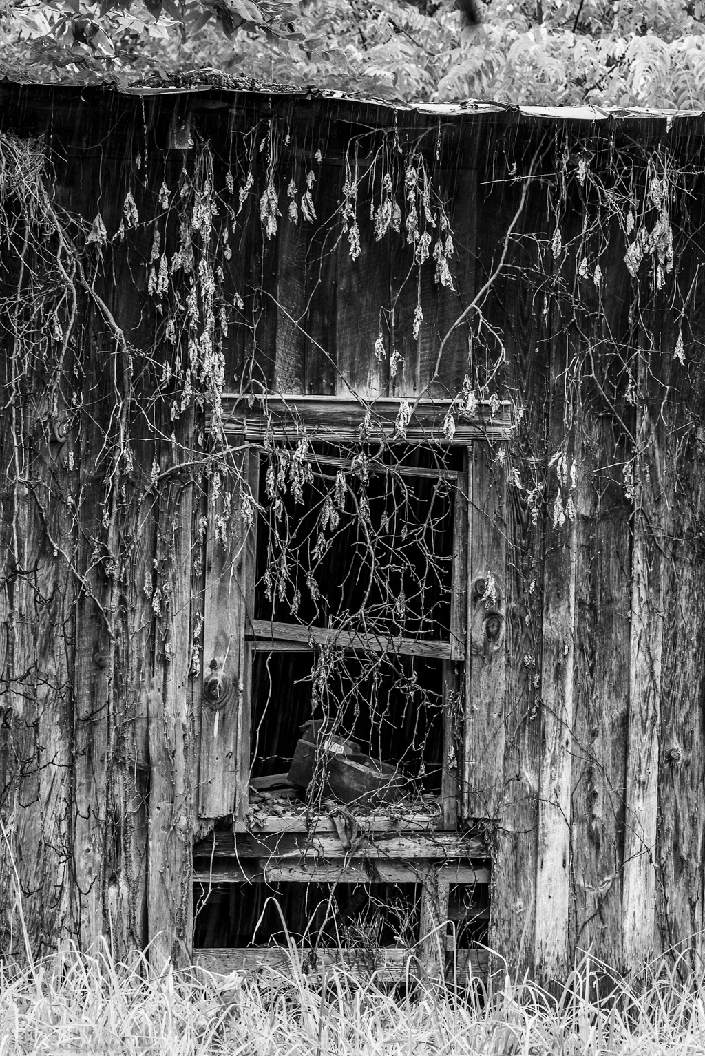 Old Jackson Barn Window Composition