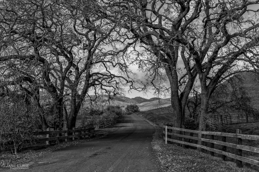 Landscape, Black and White, California, Napa