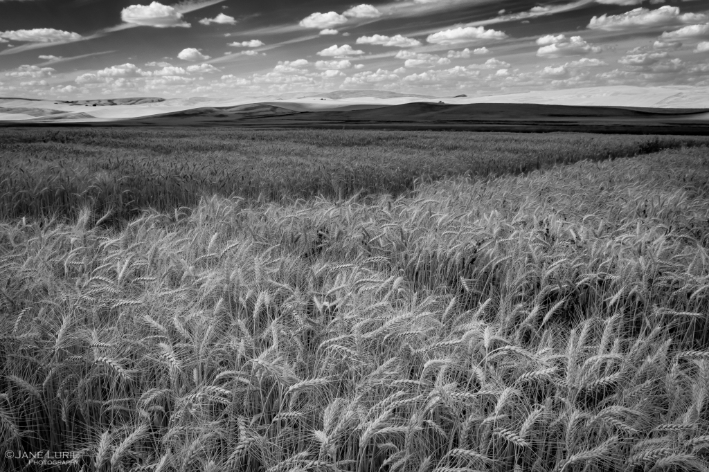 Landscape Photography, Black and White, Fujifilm X-T2