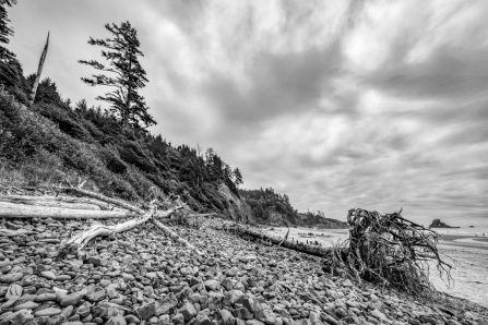 Indian Beach Driftwood and Rock Composition 2