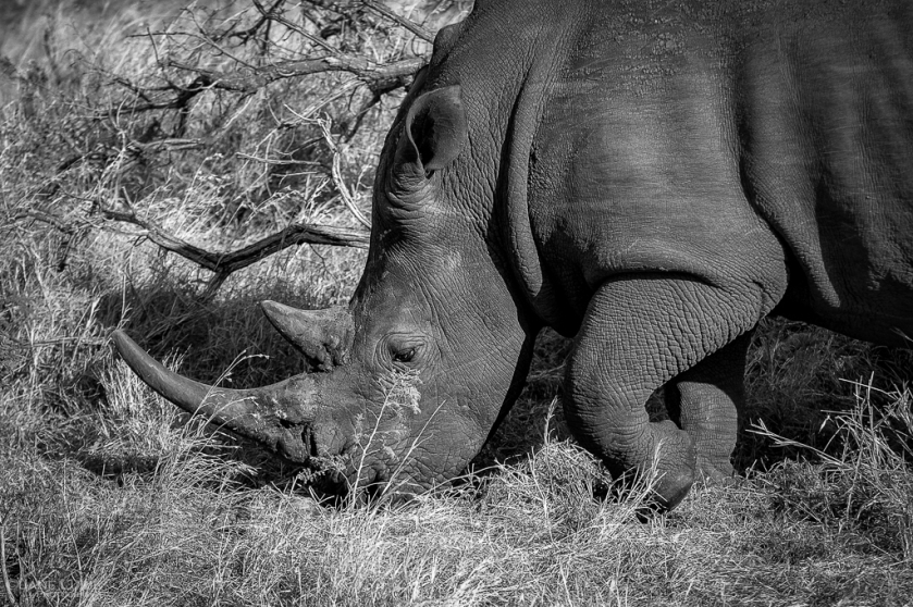 Black and White, Wildlife, Photography, Africa,