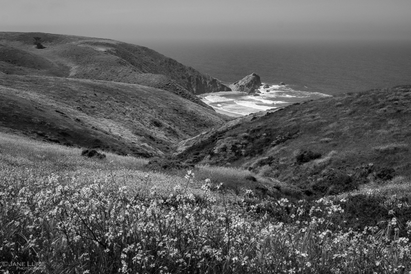 Photography, Landscape, Black and White, California, Point Reyes