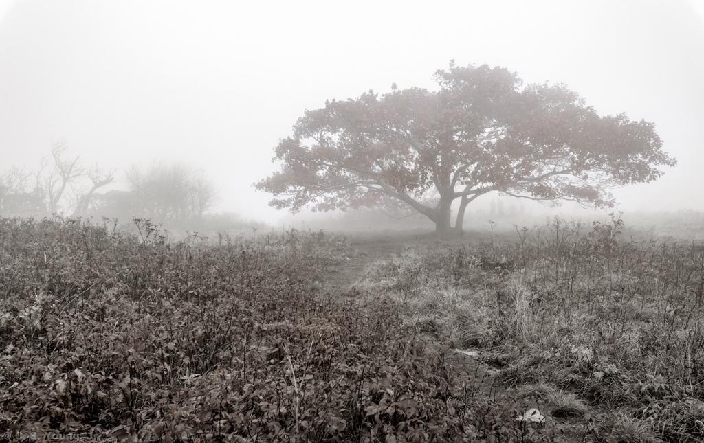 Craggy Knob Landscape 1