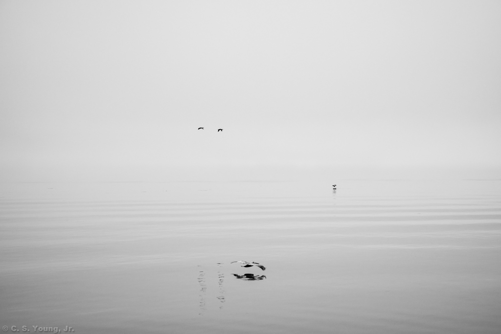 Calibogue Sound Fog Composition 1