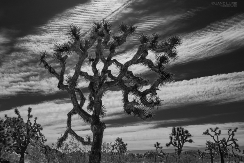 Black and White, Photography, Joshua Tree, National Park, Fujifilm X-T2, California, Desert