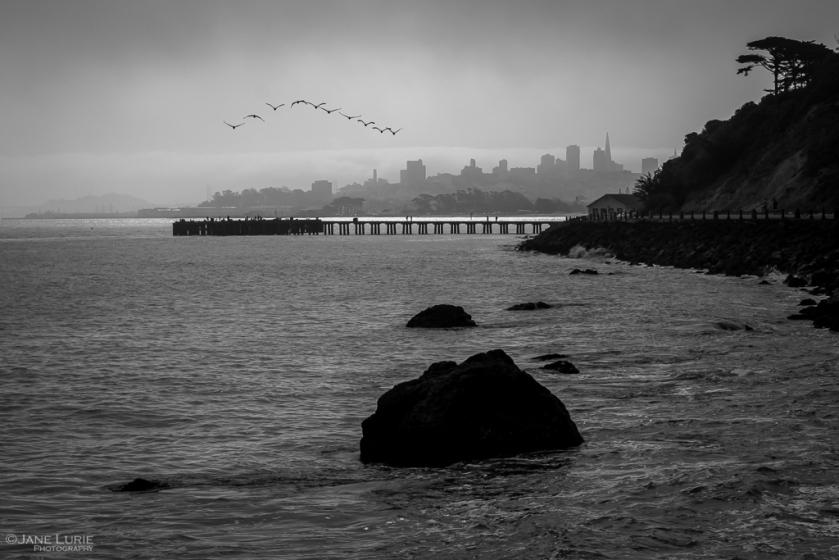 San Francisco, Black and White, Monochromia, Monochrome, Jane Lurie