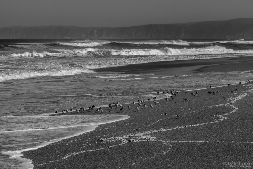 California, Ocean, Coastal Photography, Fujifilm X-T2, Nature, Birds