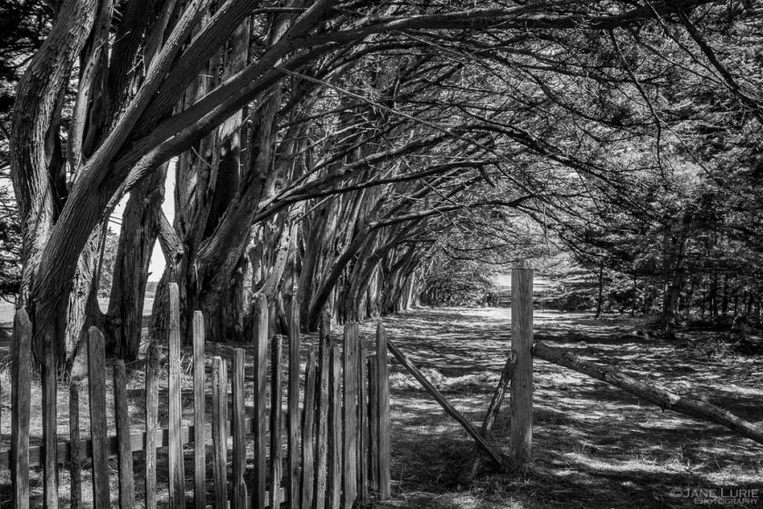 Jane Lurie, Monochromia, Black and White, Trees, Photography, Fence, Fujifilm X-T2